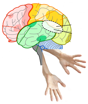 EE-brain-hands